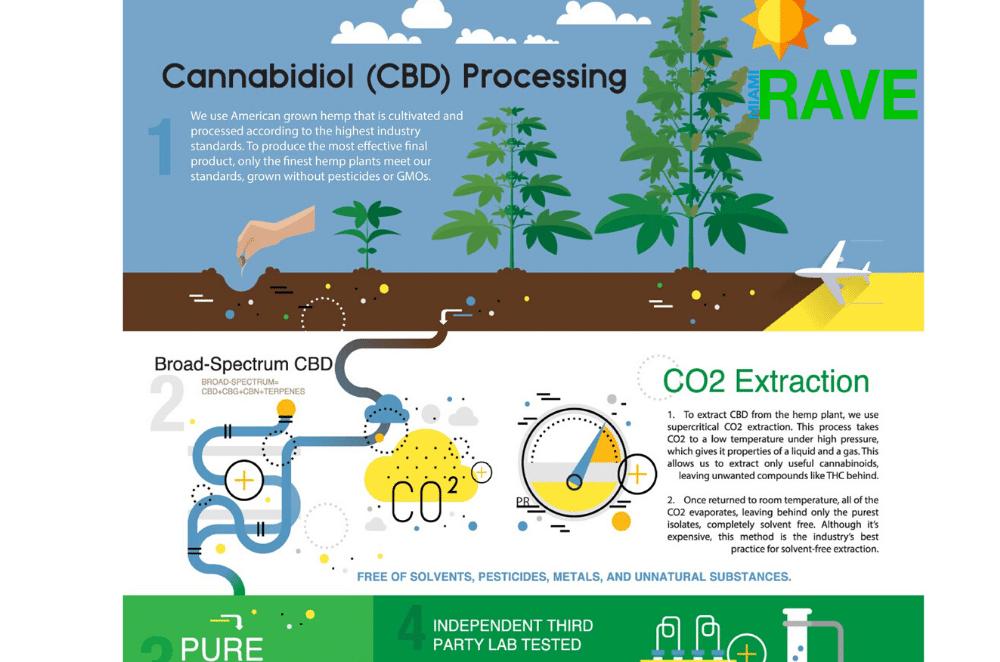 CBD Processing