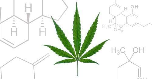 What Is The Entourage Effect & How Do Cannabis Compounds Work Together?