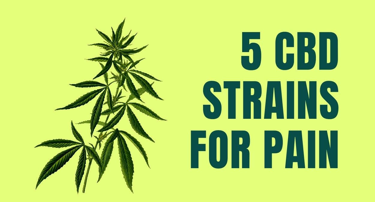 5 Best CBD Strains You Should try for Pain In 2021